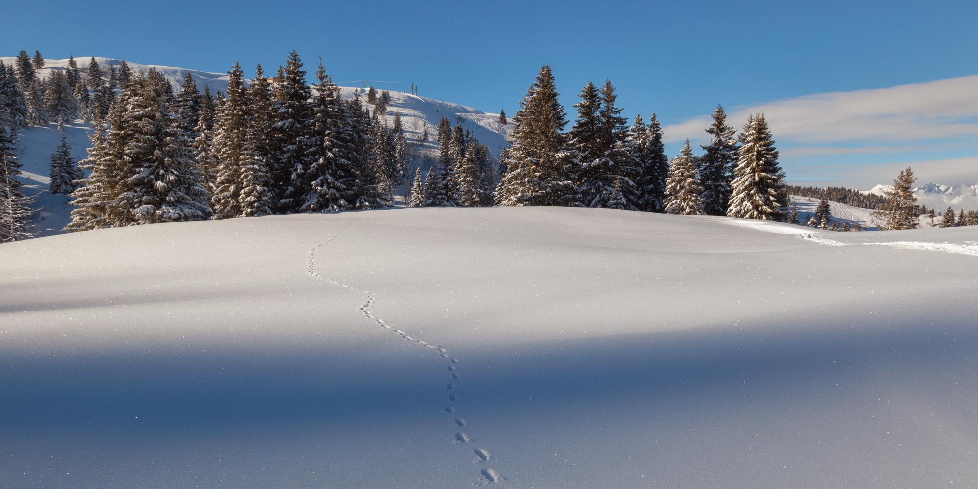 Untouched Snow near Megeve Ski Resort, France