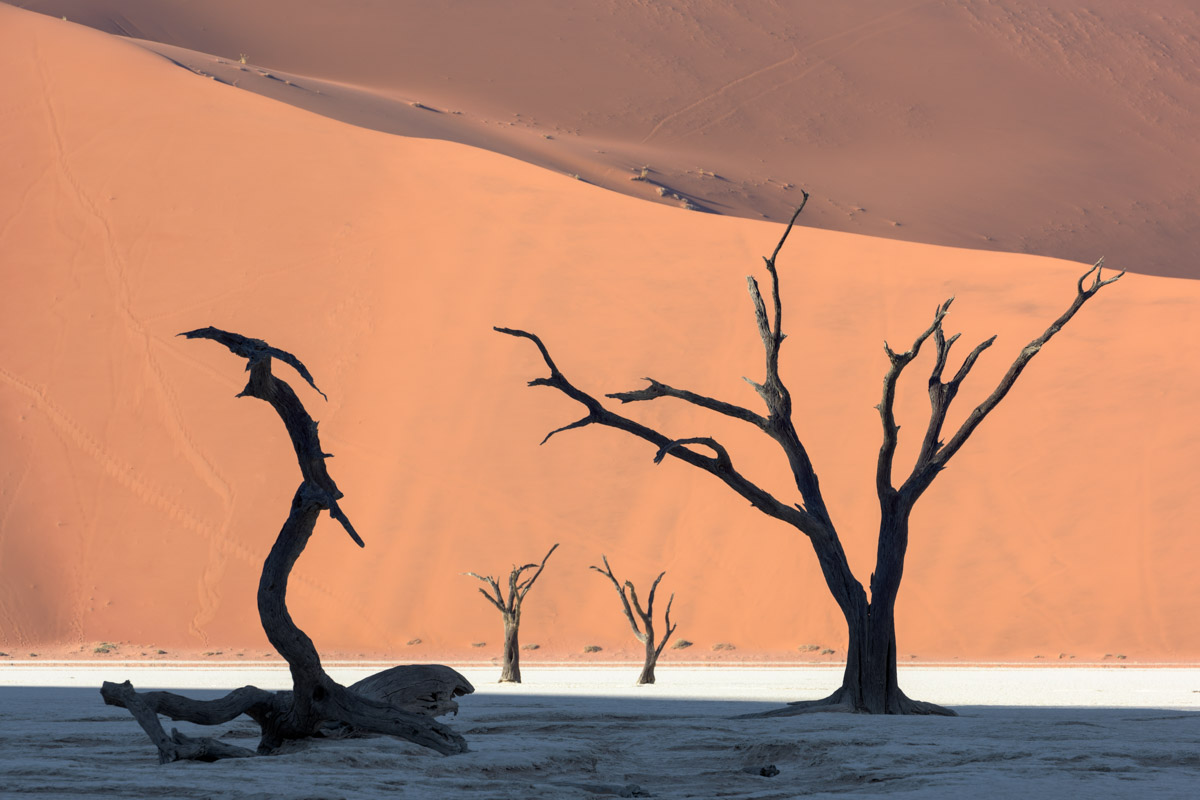 Dead Acacia Forest and Red Dune in Deadvlei, Namibia