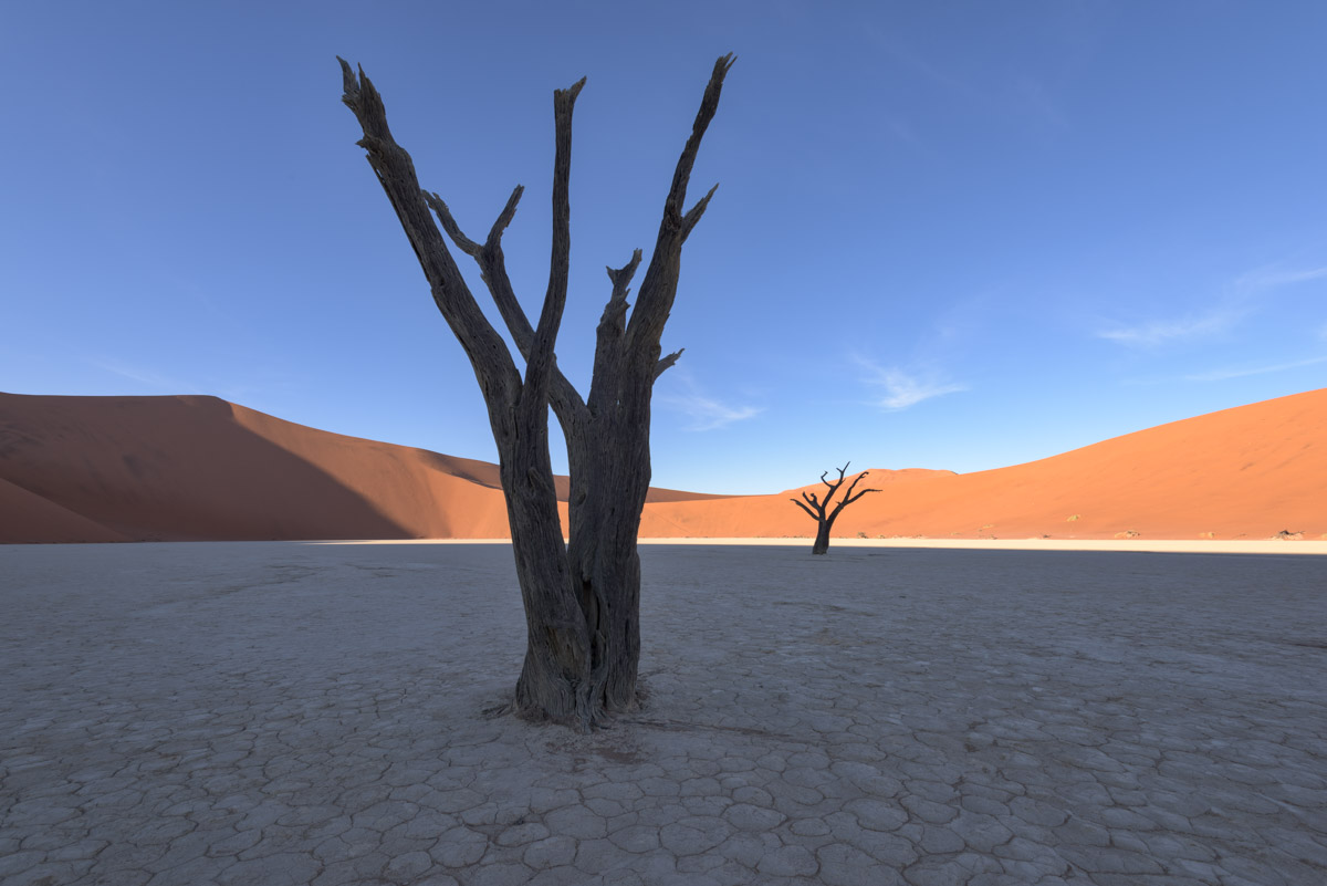 Dead Acacia Forest, Deadvlei, Namibia