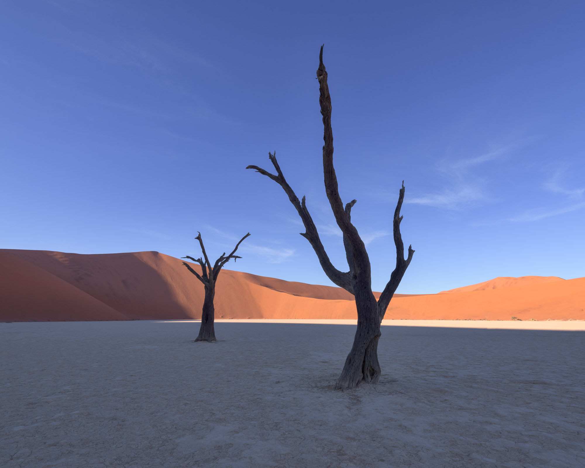 Dead Acacia Forest in Deadvlei, Namibia