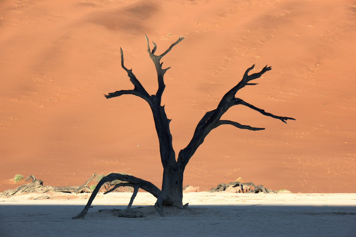 Dead Acacia Trees and Red Dune, Deadvlei, Namibia