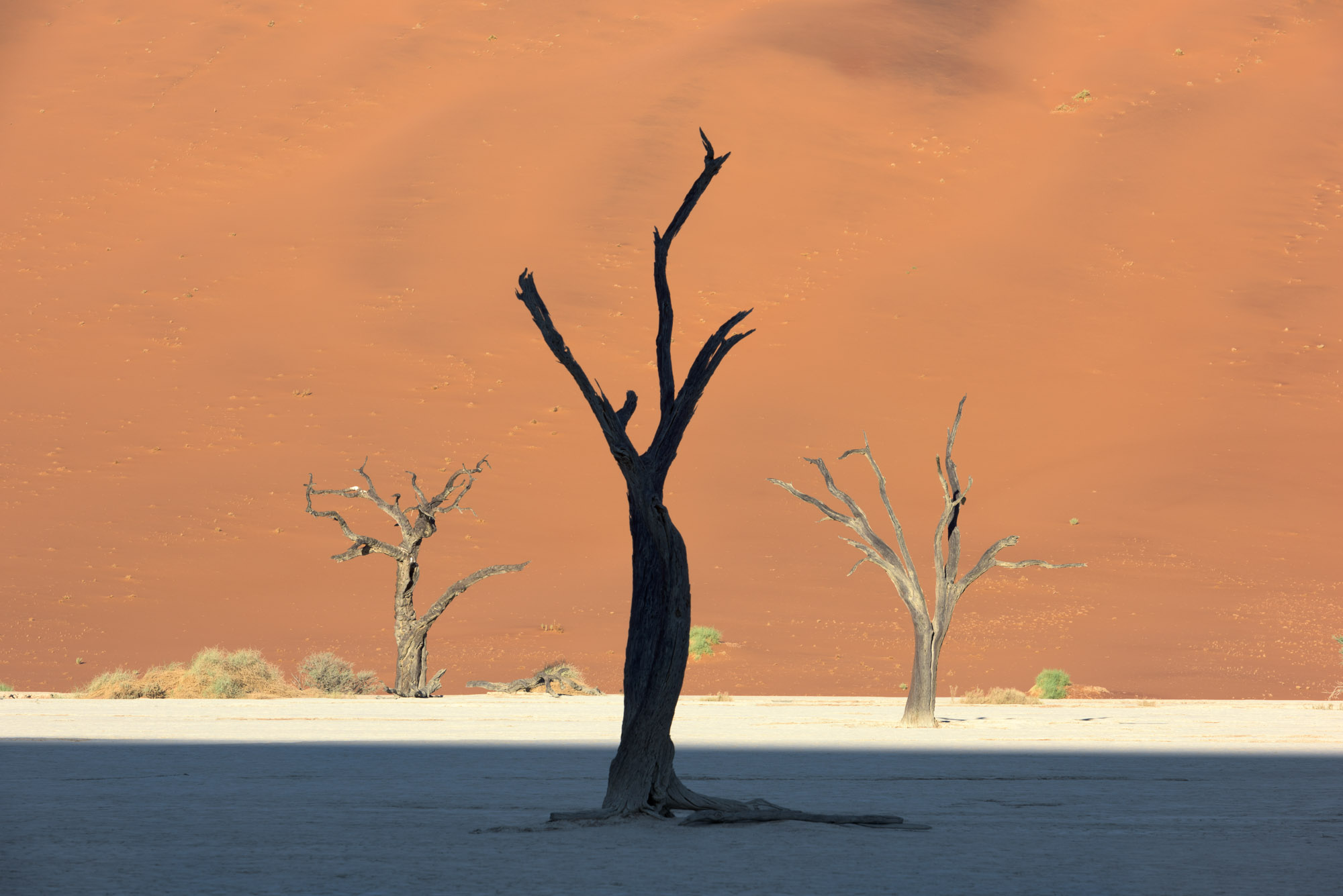 Dead Acacia Trees and Red Dune, Deadvlei, Sussusvlei, Namibia