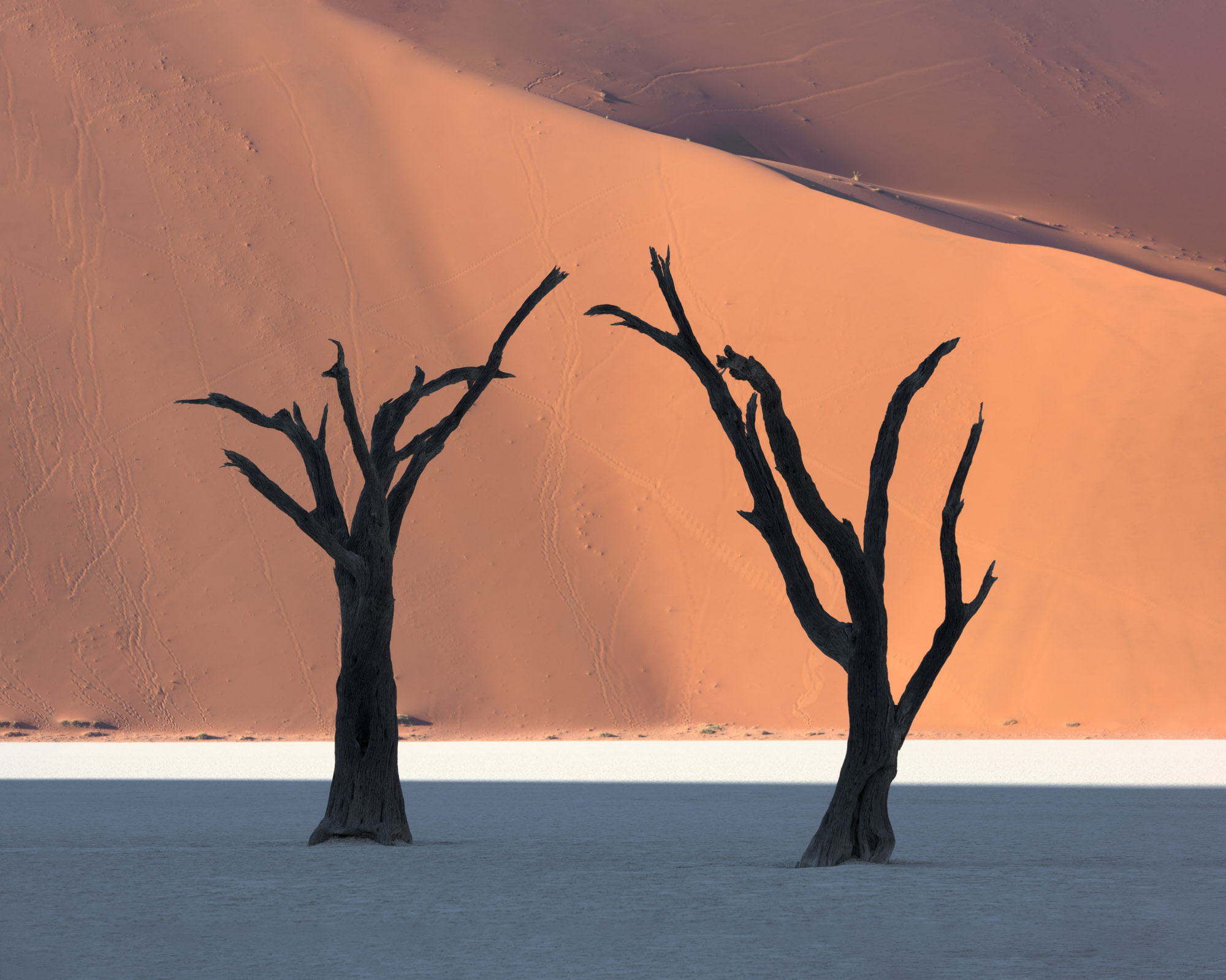 Dead Acacia Trees and Red Dune in Deadvlei, Namibia