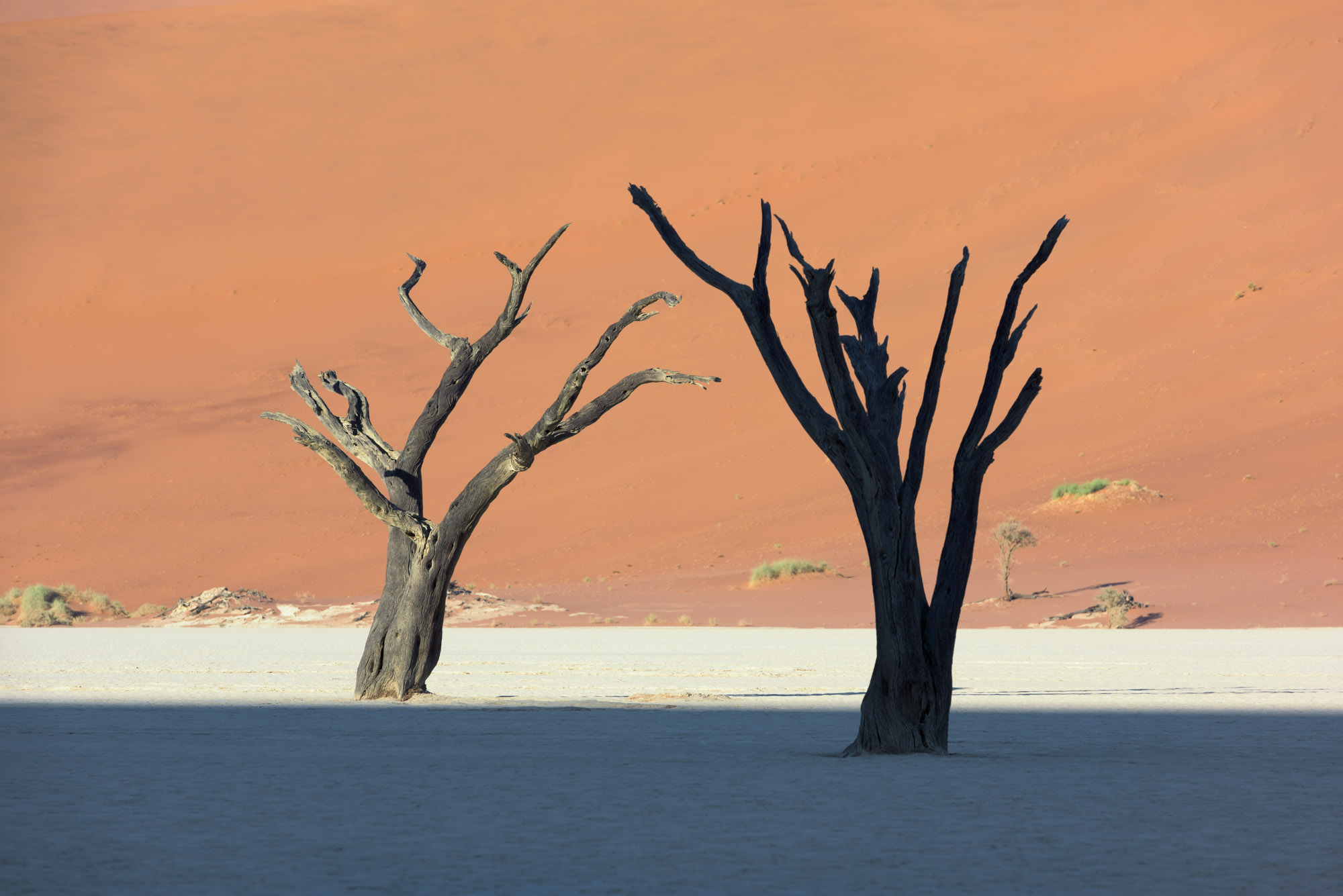 Dead Acacia Trees and Red Dune in Deadvlei, Sussusvlei, Namibia