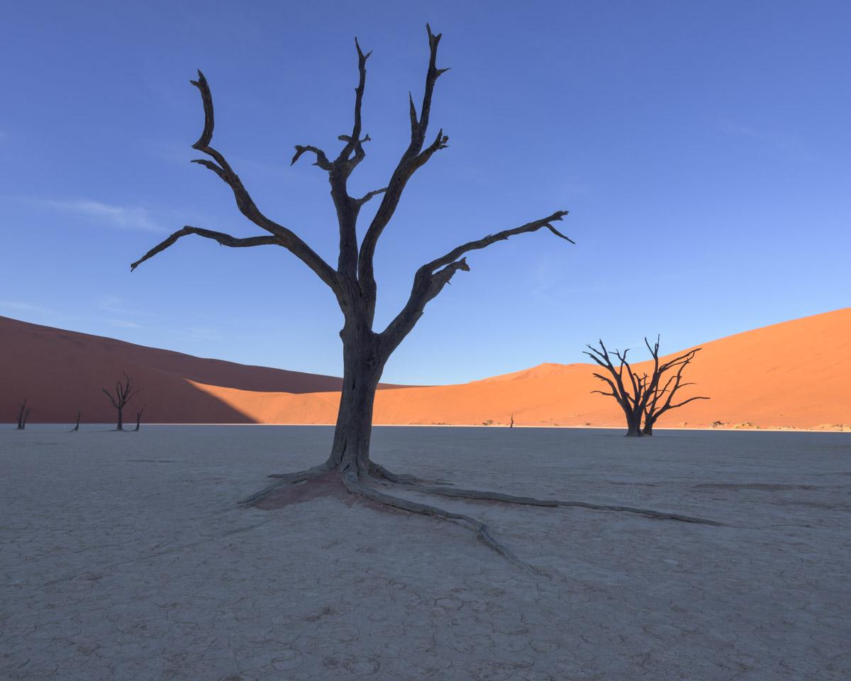Dead Acacia Trees, Deadvlei, Namibia