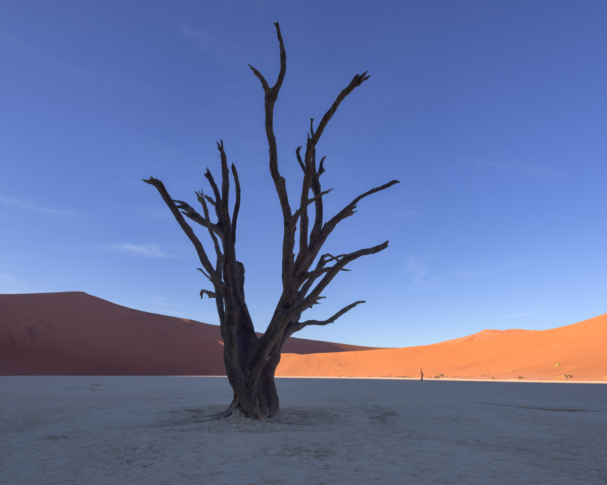 Dead Acacia Trees, Deadvlei, Sossusvlei, Namibia