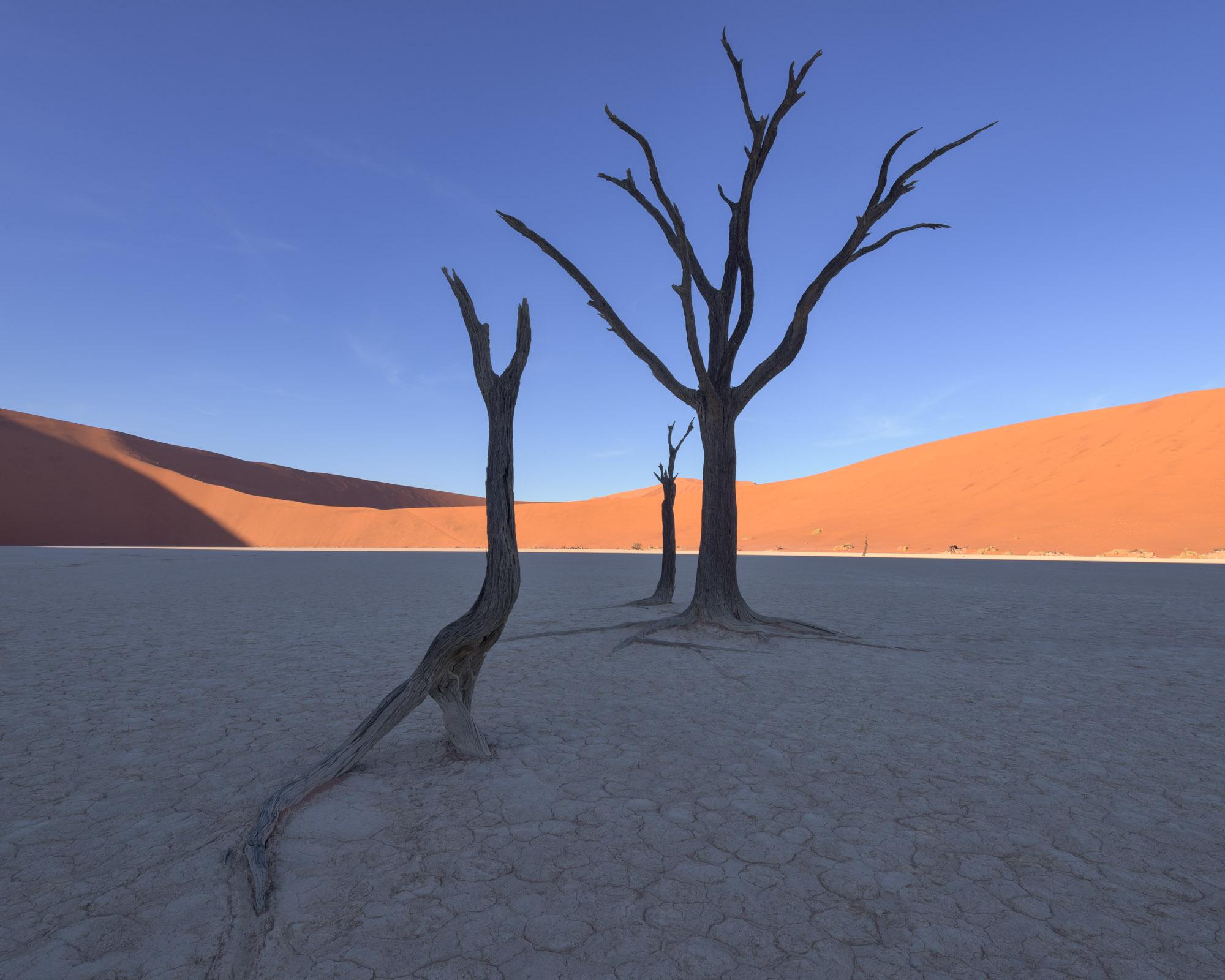 Dead Acacia Trees in Deadvlei, Namibia