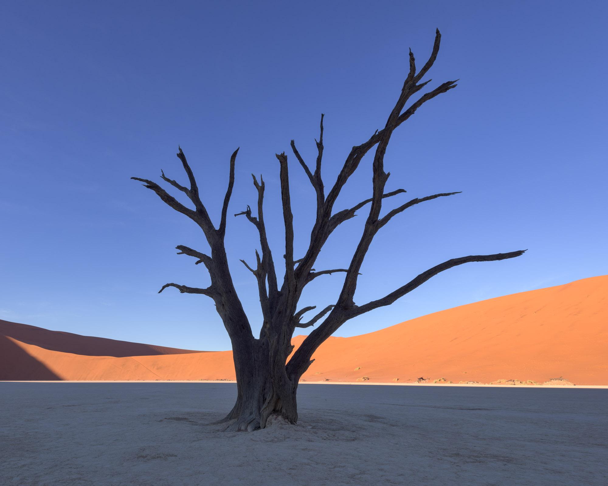 Dead Acacia Trees in Deadvlei, Sossusvlei, Namibia