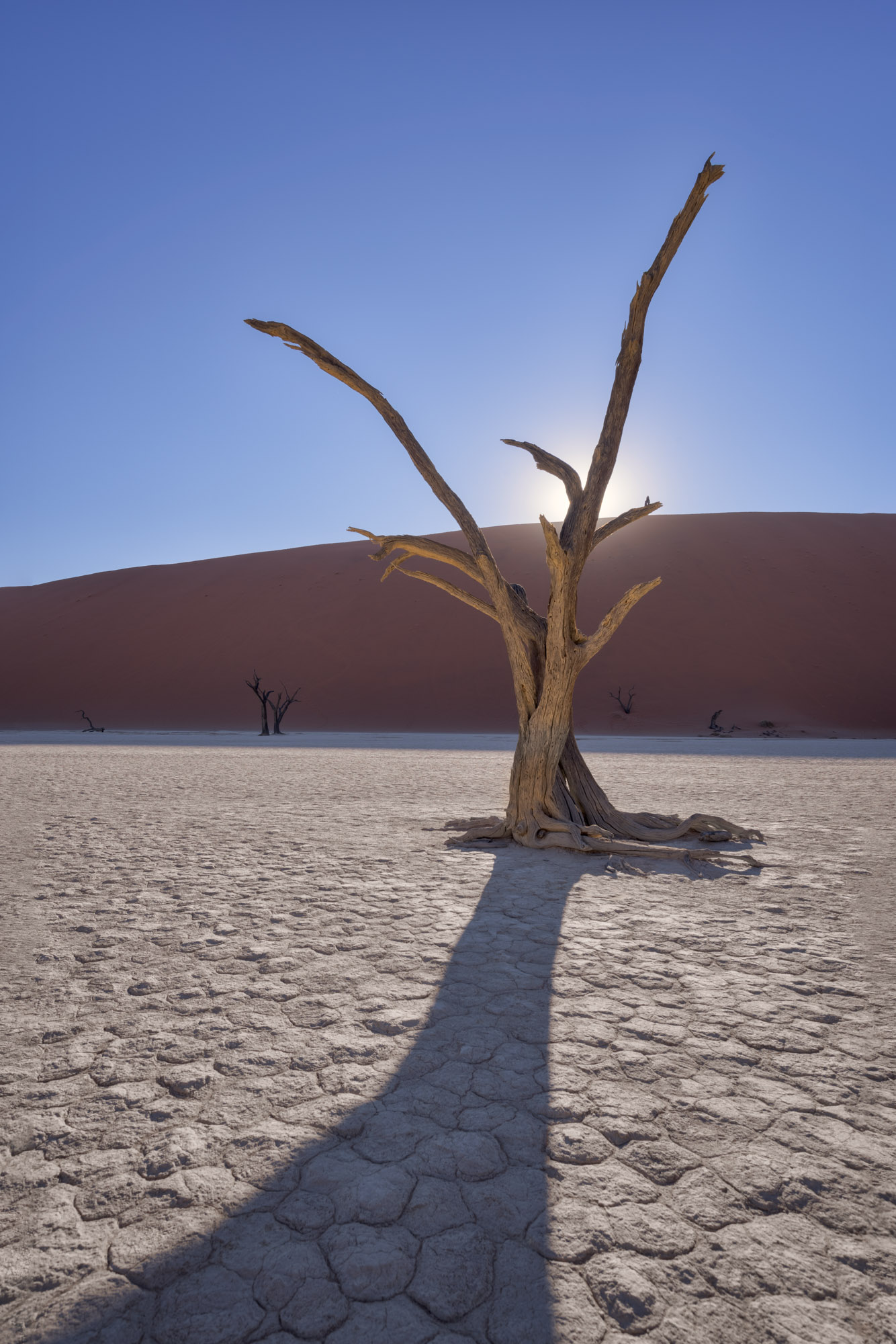 Dead Camelthorn Forest and Deadvlei, Namibia
