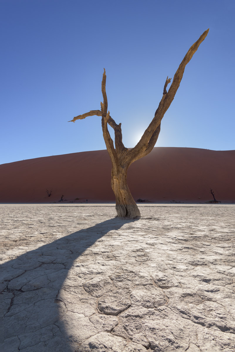 Dead Camelthorn Forest in Deadvlei, Namibia