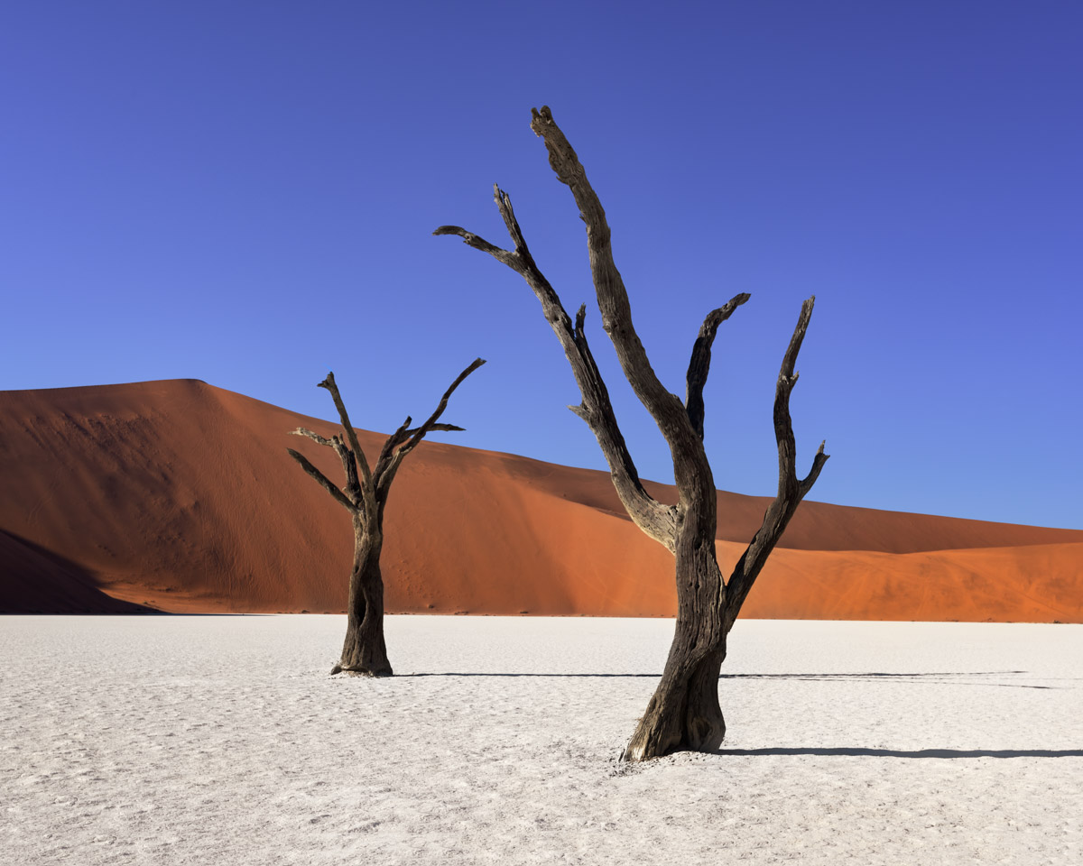 Dead Camelthorn Trees, Deadvlei, Namibia