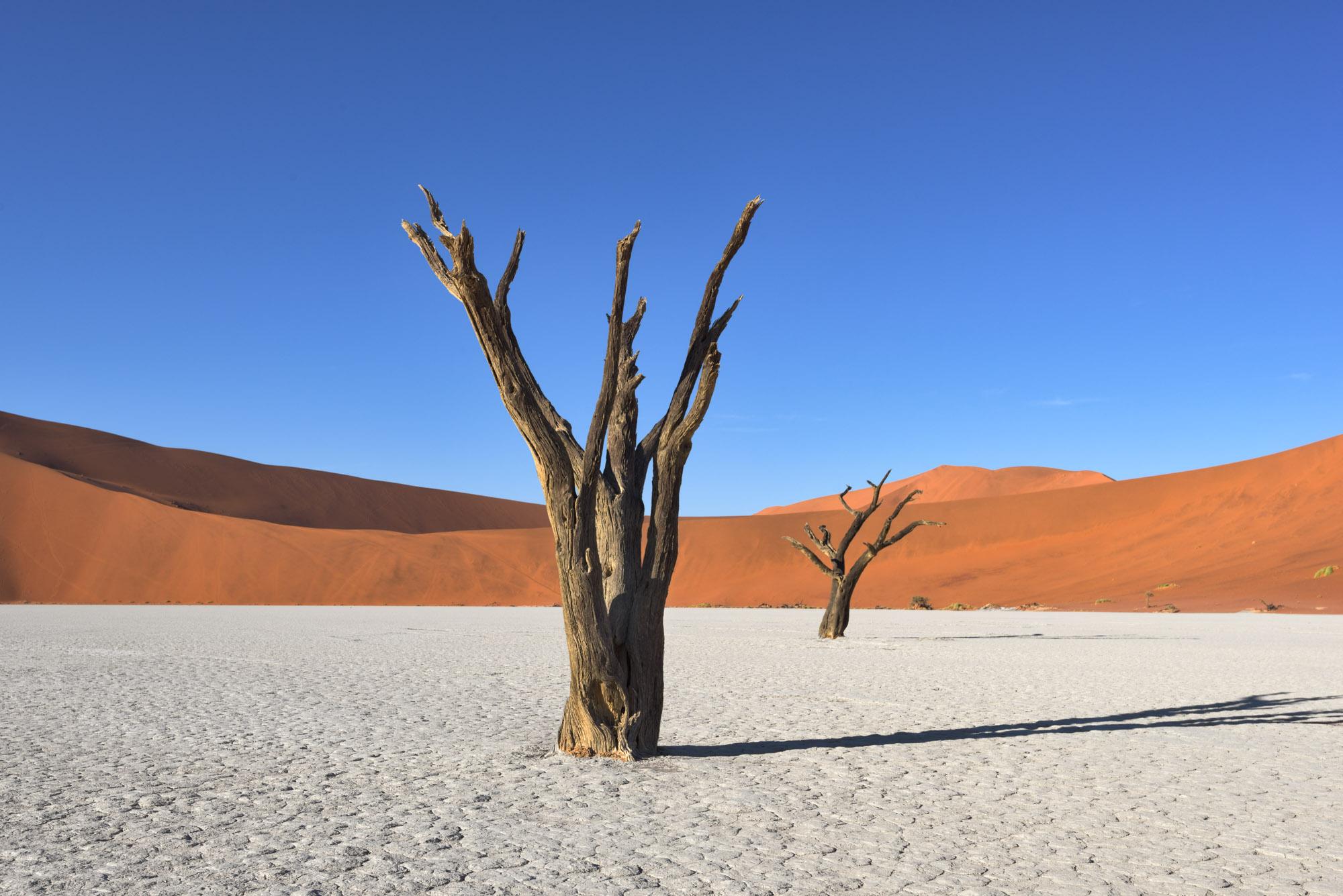 Dead Camelthorn Trees, Deadvlei, Sossusvlei, Namibia