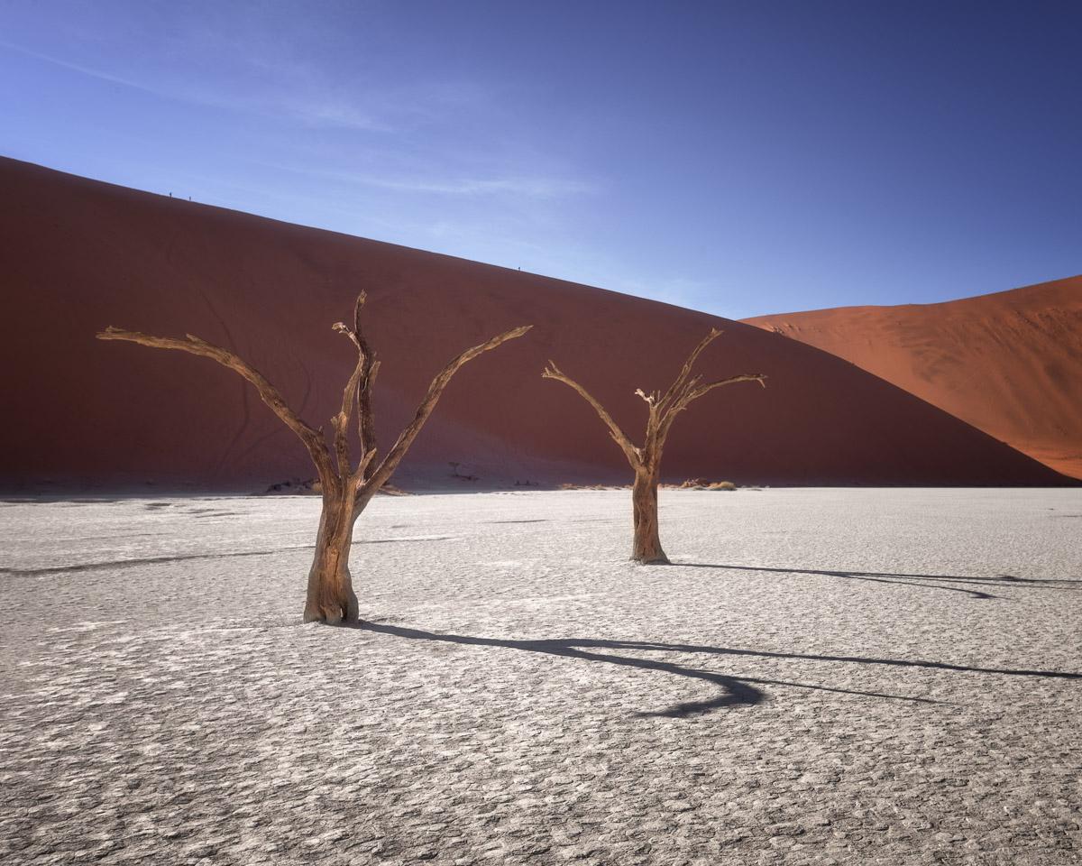 Dead Camelthorn Trees in Deadvlei, Sossusvlei, Namibia