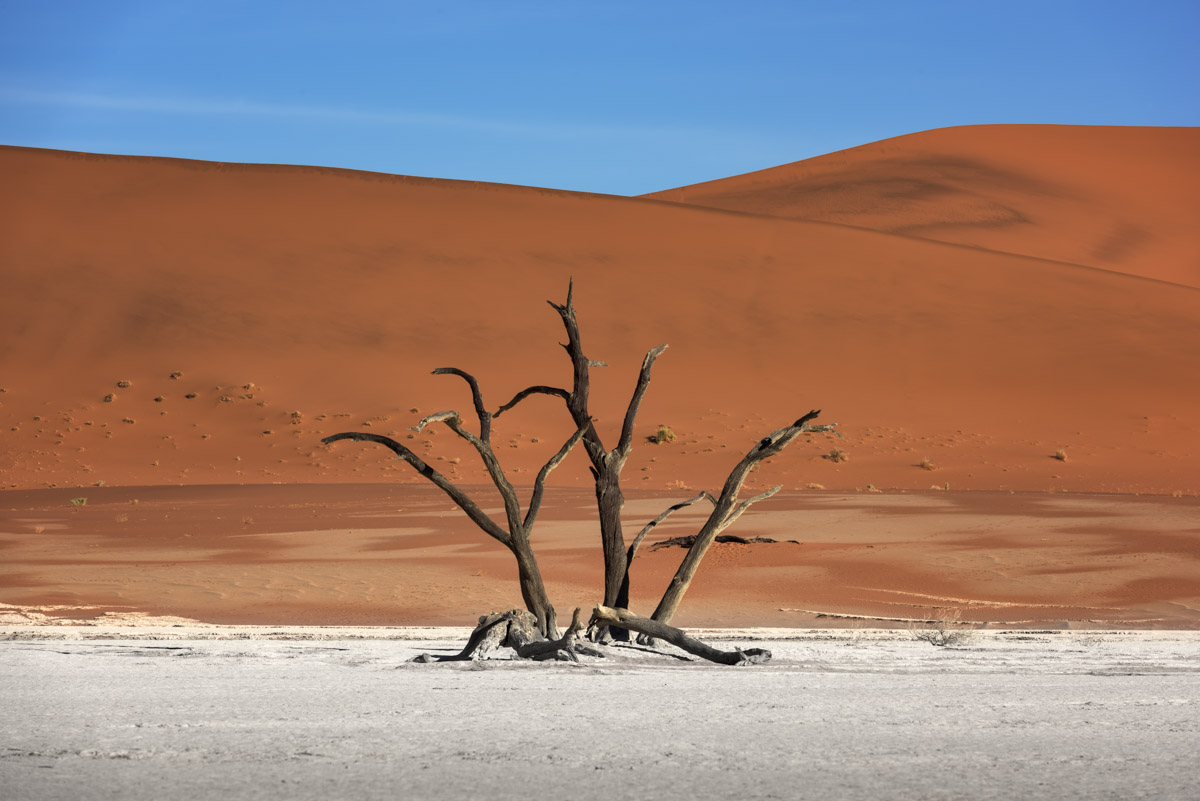 Dead Forest of Deadvlei, Namibia