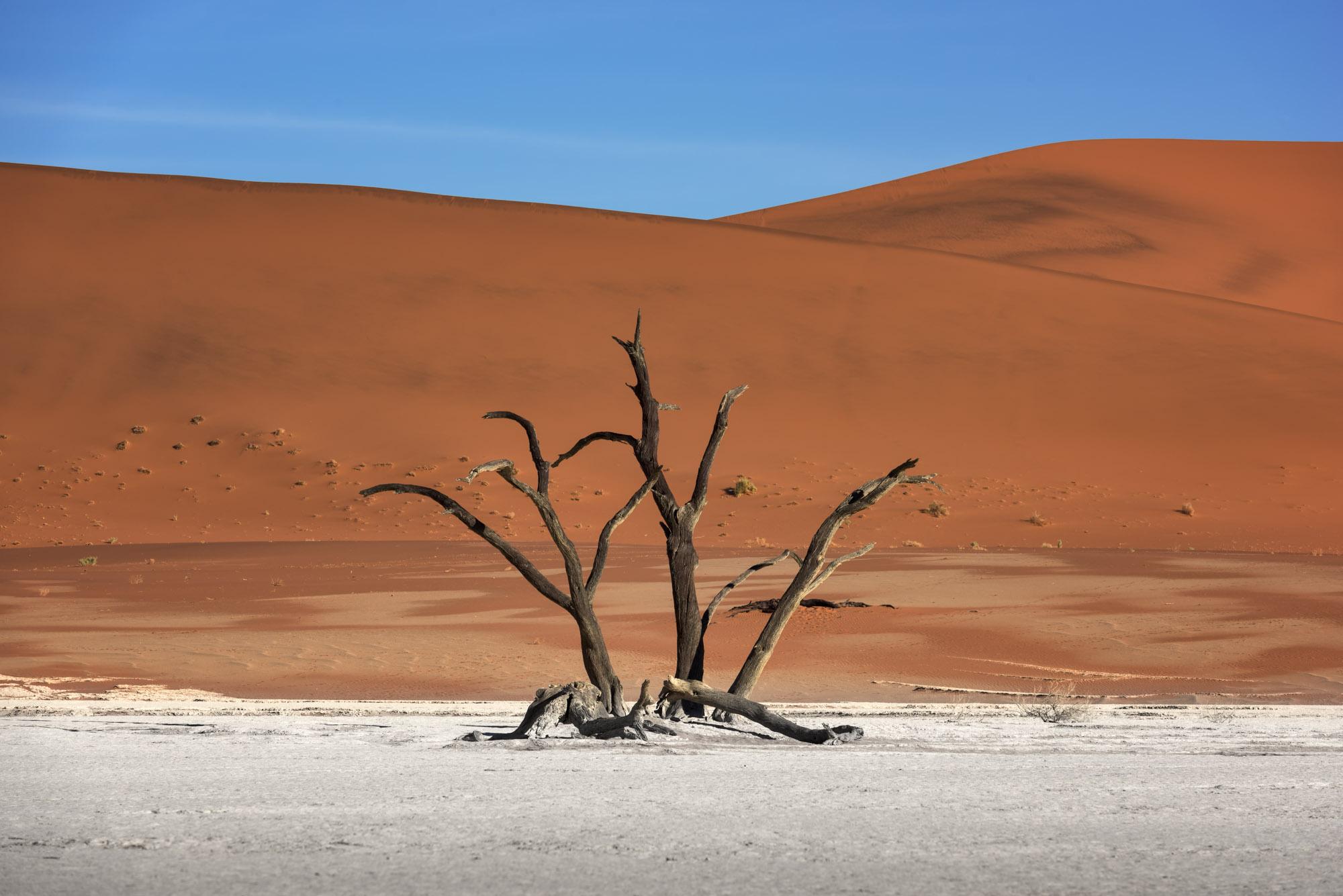 Dead Forest of Deadvlei, Namibia