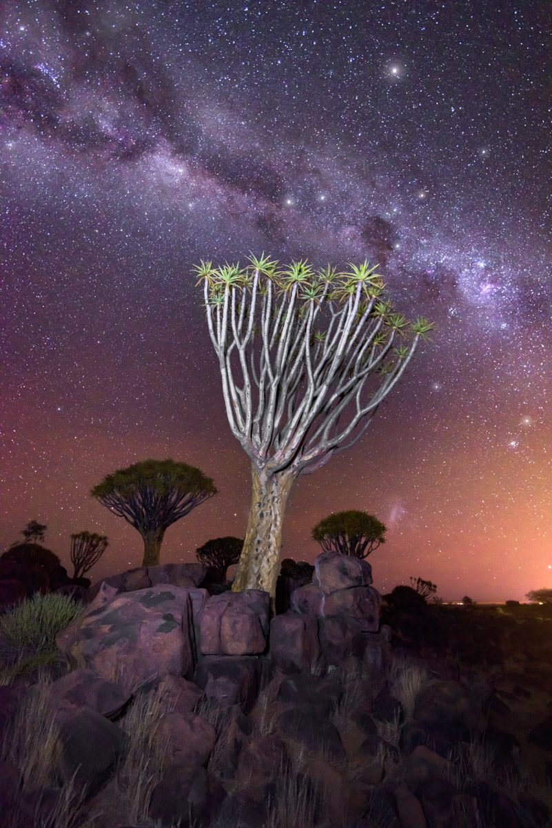 Aloe Tree Forest and Starry Sky, Keetmanshoop, Namibia