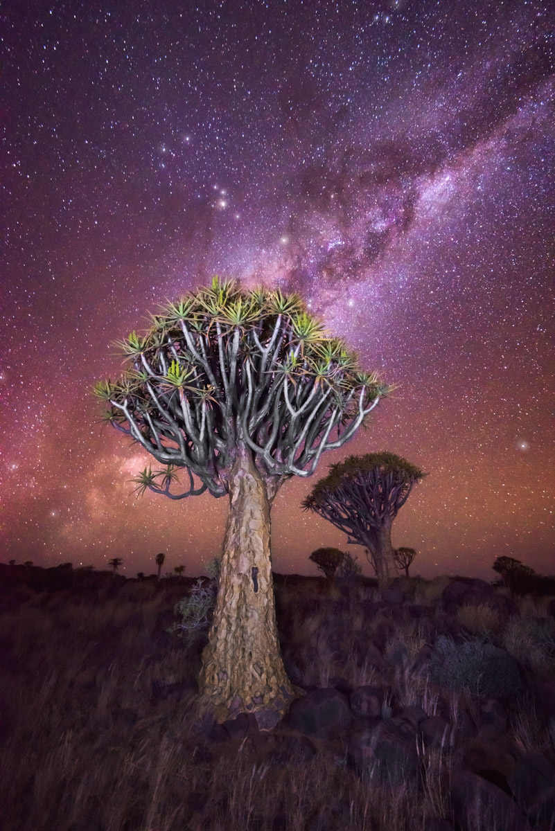 Quiver Tree Forest and Milky Way, Keetmanshoop, Namibia