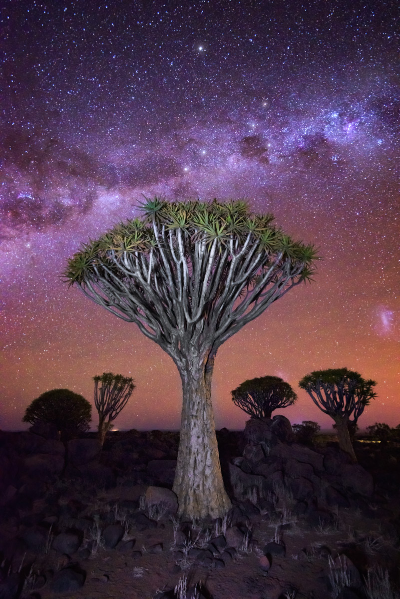 Quiver Tree Forest and Starry Sky, Keetmanshoop, Namibia