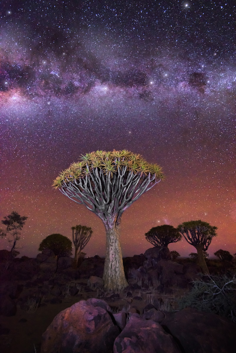 Quiver Tree Forest, Milky Way, Keetmanshoop, Namibia
