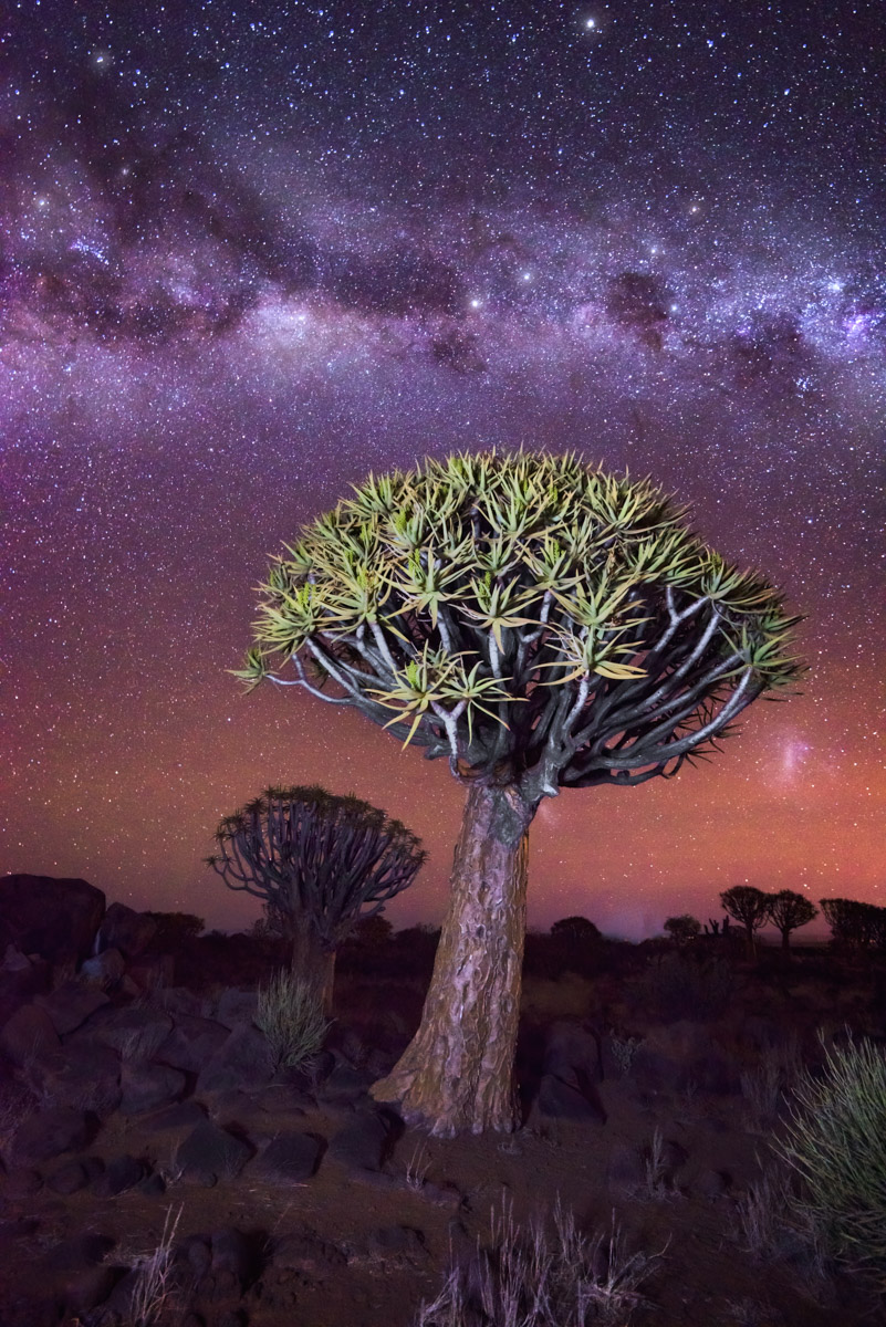 Quiver Tree Forest, Starry Sky, Keetmanshoop, Namibia